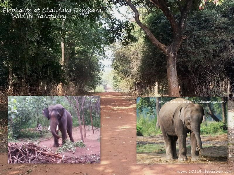 elephants-at-chandaka-dompara-wildlife-santuary