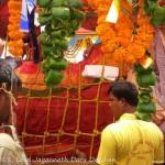 Nabakalebara 2015 – Lord Jagannath's Daru Darshan!