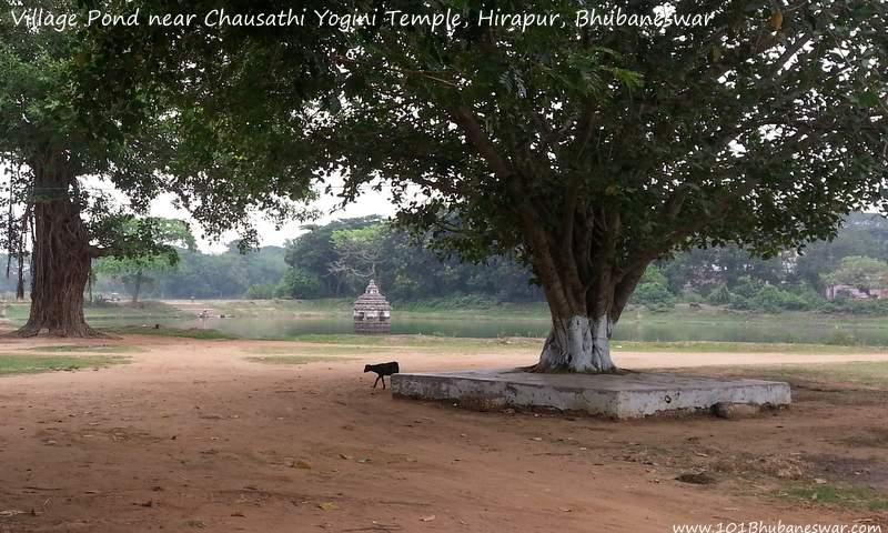 Village Pond near Chausathi Yogini Temple, Hirapur, Bhubaneswar