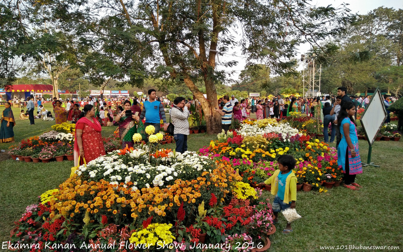 ekamra-kanan-annual-flower-show-january-2016-1